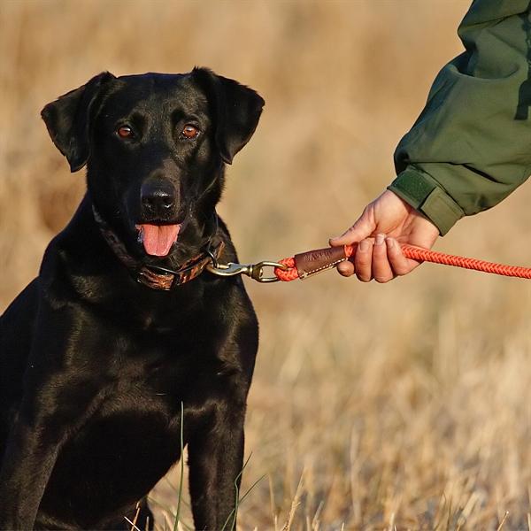 standard dog lead