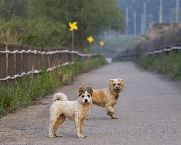 two cute dogs standing on the road