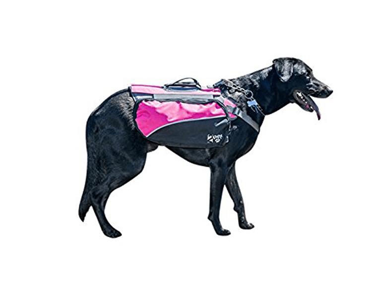 dog wearing a waistcoat harness
