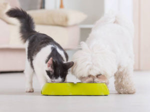 Here's Why It Is Not Okay for Dogs and Cats to Eat Each Other's Food