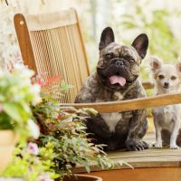 What Are the Top 3 Best Dog Breeds?