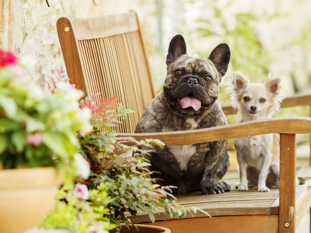 Top 3 Best Dog Breeds
