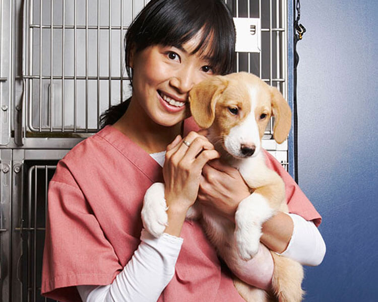 a puppy carried by a dog breeder