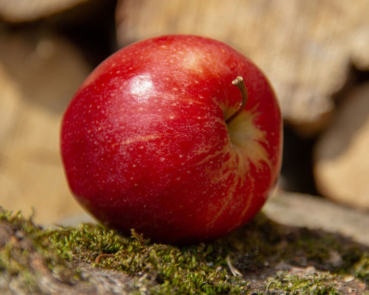apple, which is good for dogs