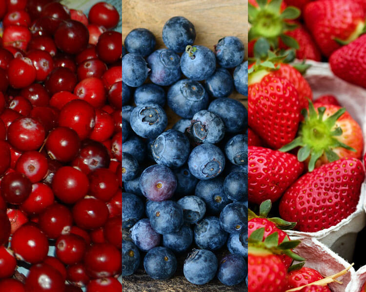 cranberries, blueberries and strawberries, which are good for dogs