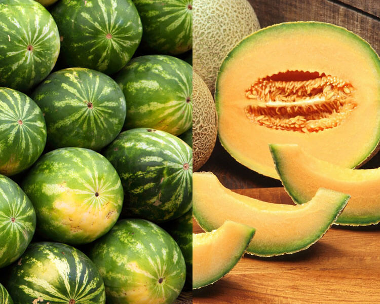 cantaloupe and watermelon, which are good for dogs