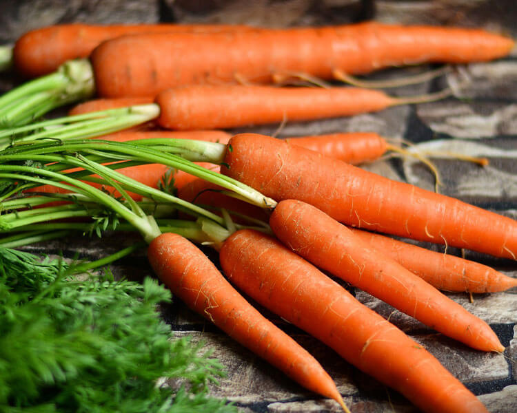 carrots, which are good for dogs