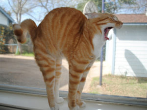 Neutered Cat Humping: 5 Reasons It Happens