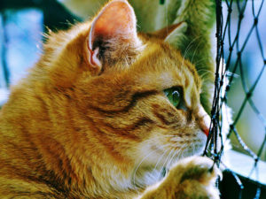4 Things You Must Not Miss in Choosing a Boarding Cattery