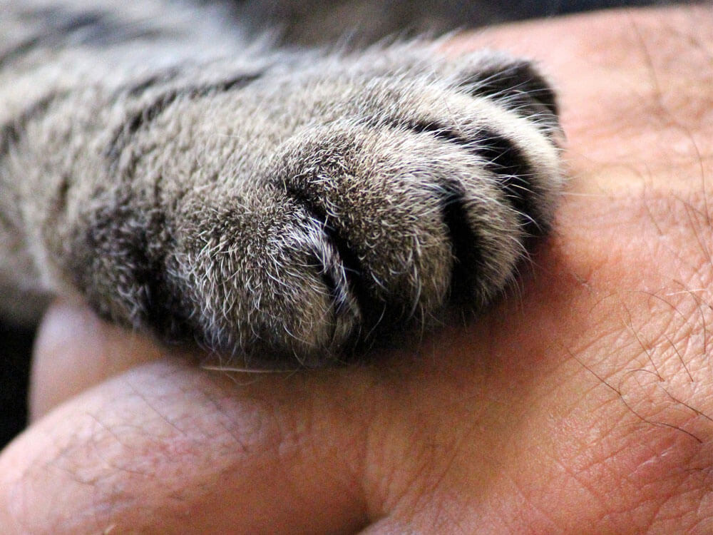 cat paw touches the human hand