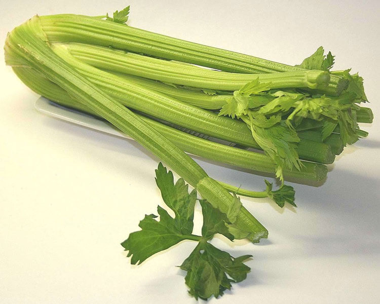 celery, which is good for dogs
