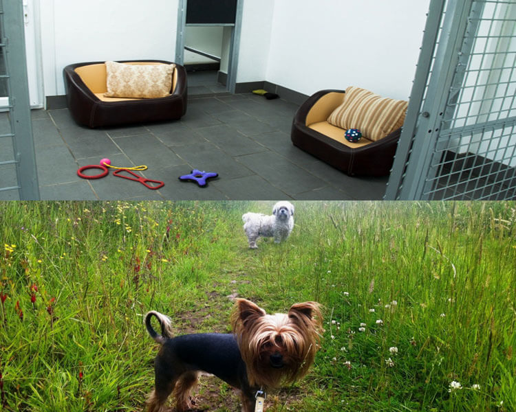 clyde valley pet retreat, a dog hotel