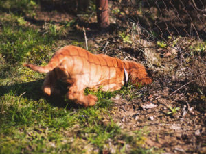 Top 6 Reasons for Dog Digging – Plus Effective Solutions