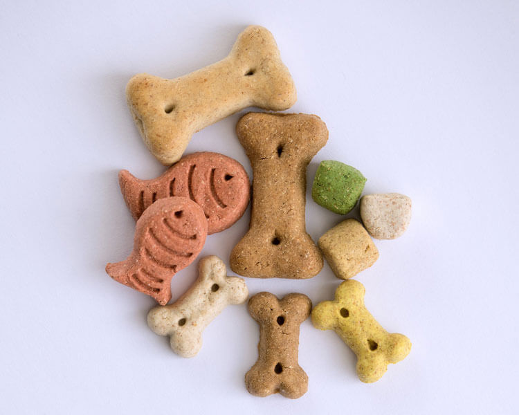 dog foods, which are harmful for cats