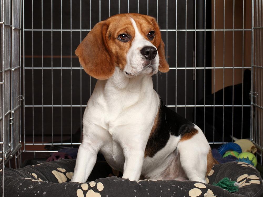 Dog in a Boarding Kennel