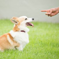 Dog Training: 8 Golden Rules That Can Turn Anyone Into an Alpha Dog