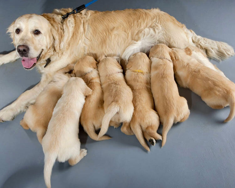 a mother dog with her entire litter