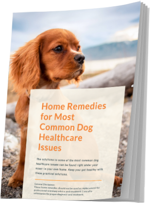 home-remedies-for-dog-health-issues