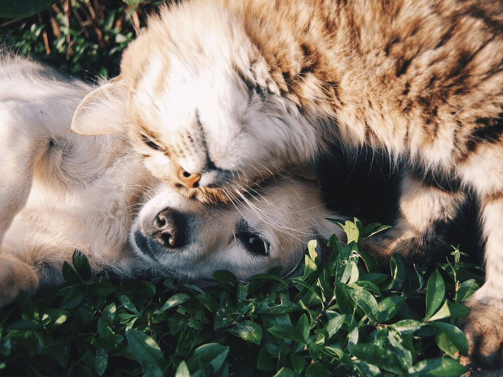 dogs and cats lying on the grass