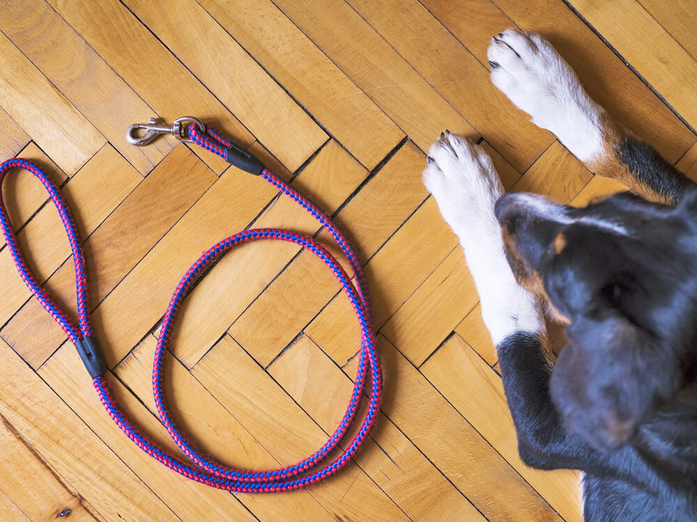 how to stop dog pulling on lead 2