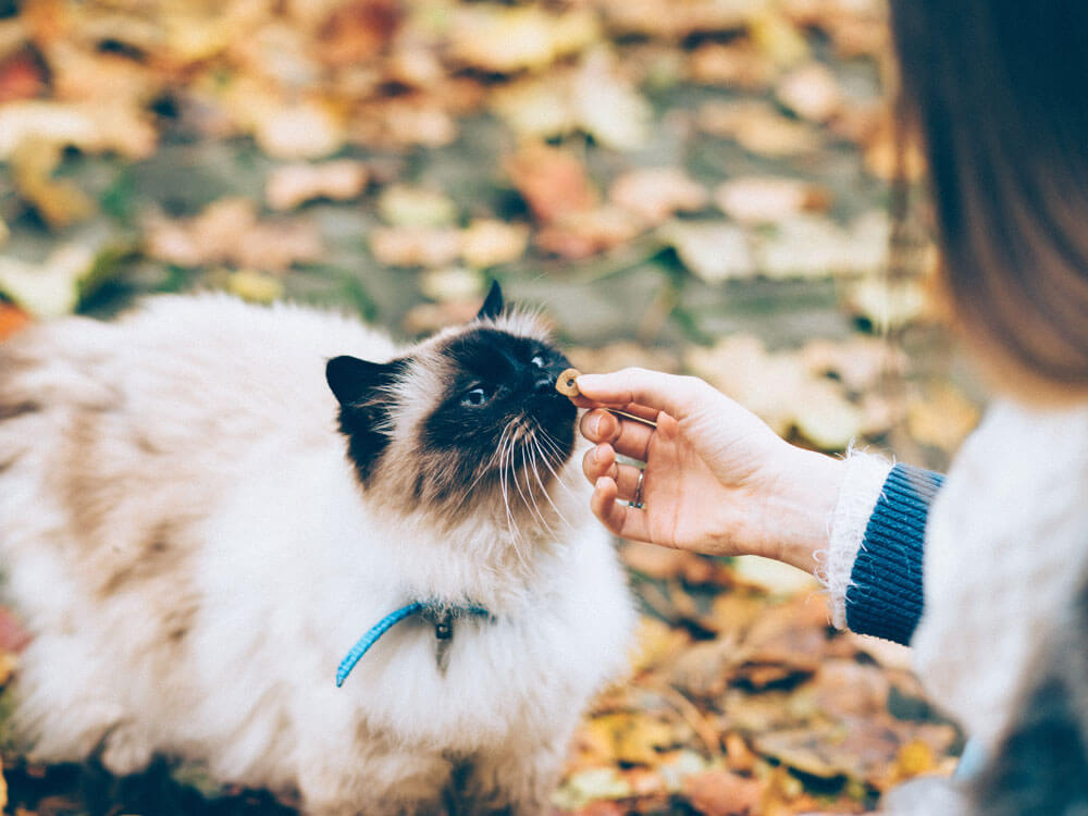 lady gives food to a cat