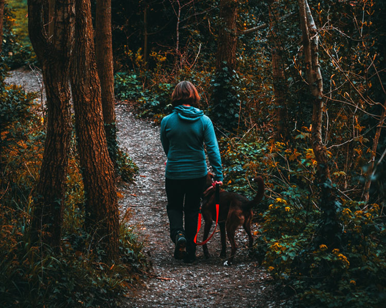a woman leads her dog in the woods