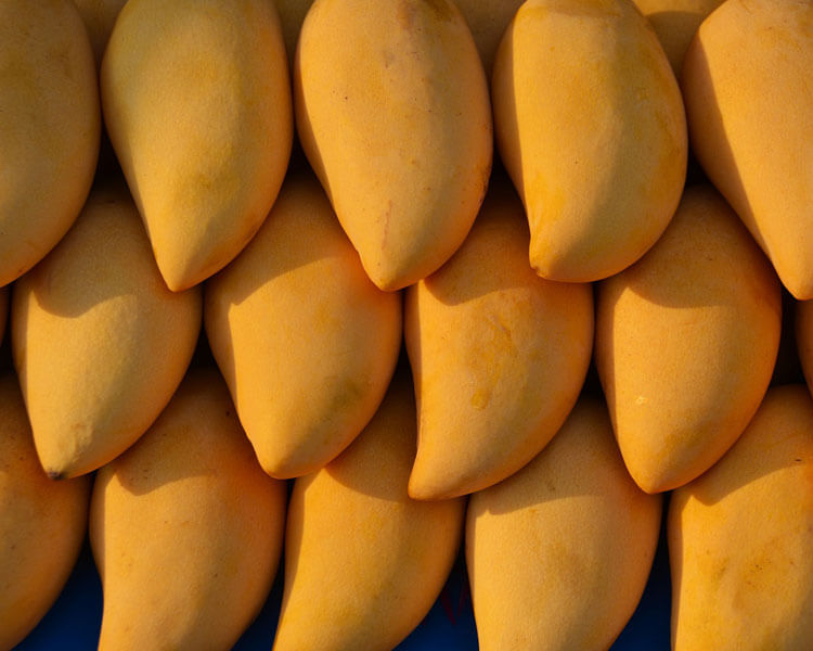 mangoes, which are good for dogs