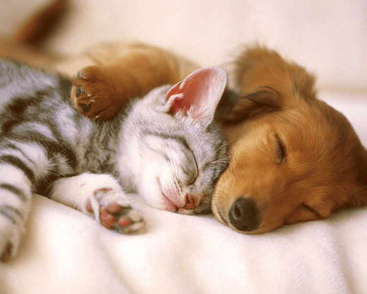 dog and cat peacefully sleeping