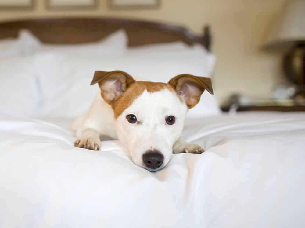 dog resting in a pet hotel