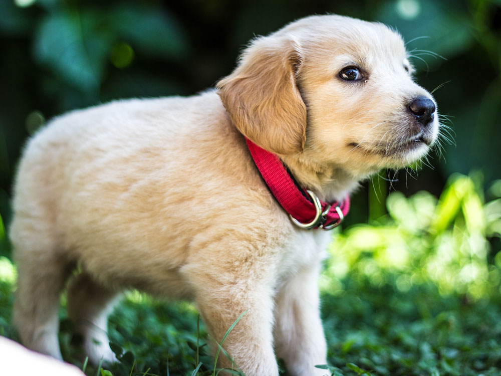 puppy checklist 2