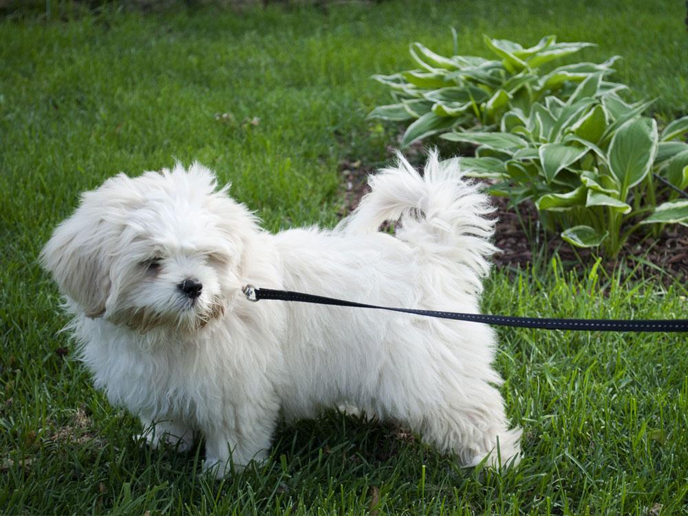 puppy checklist 3