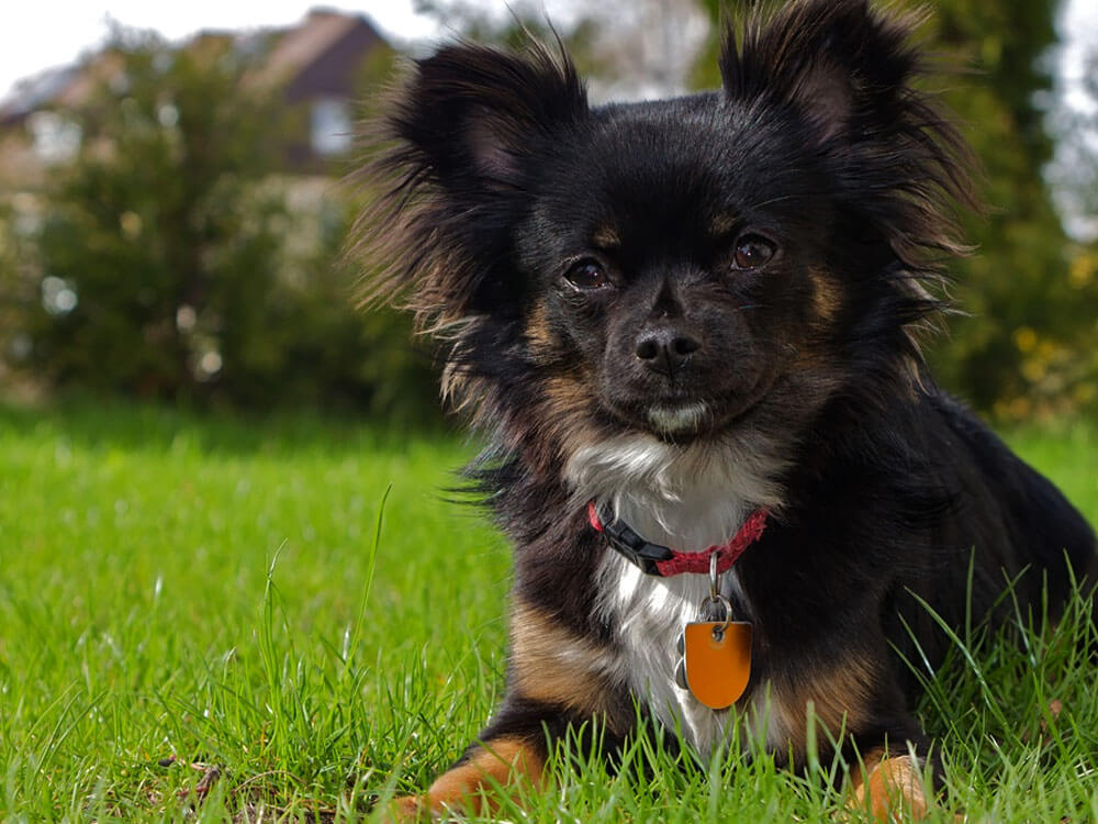 puppy checklist 5