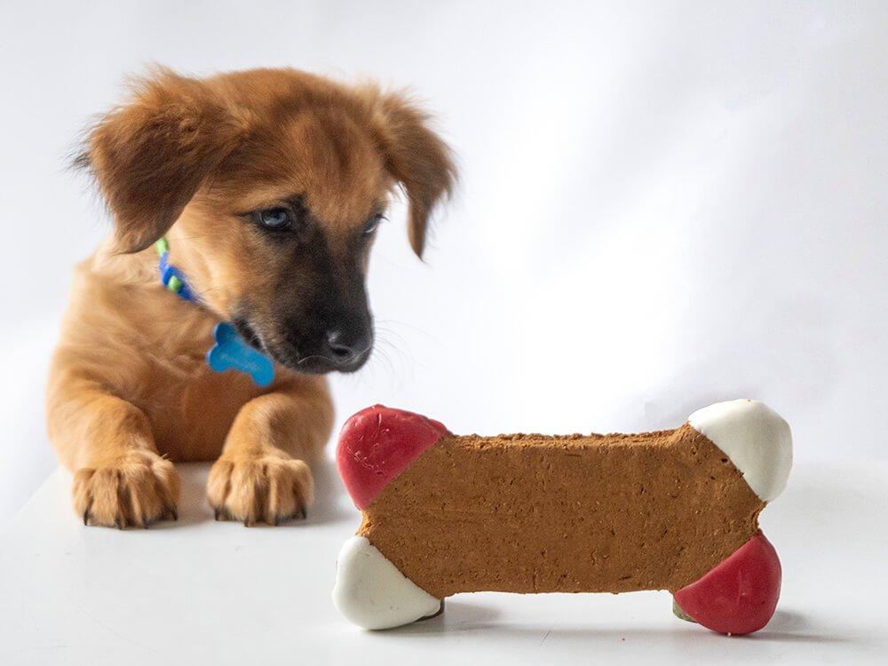puppy checklist 7