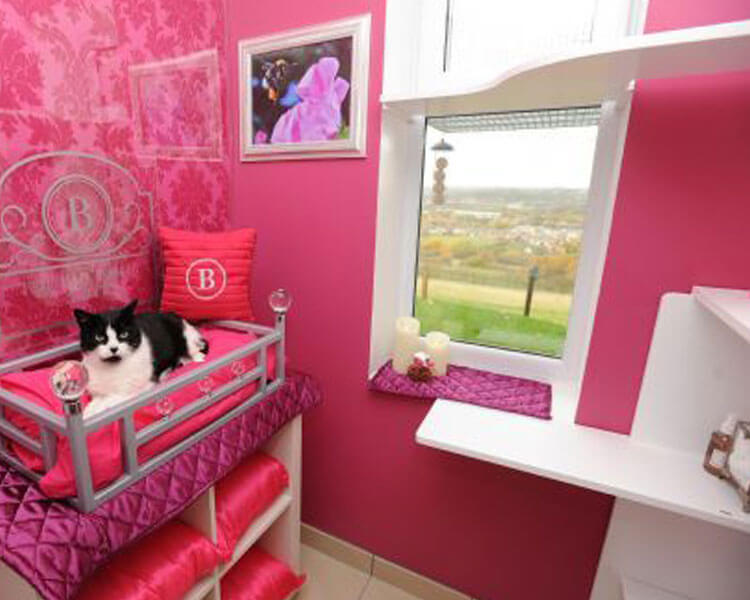 the ings luxury cat hotel