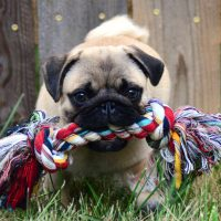 What Kinds of Dog Chews Are Safe for My Dog?