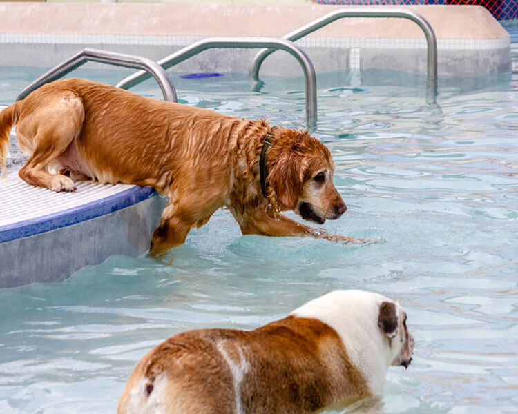 two dogs enjoying in the swimming pool