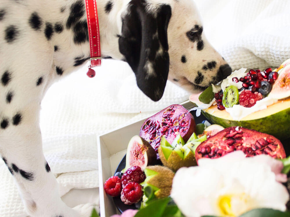 veggies and fruits that are good for dogs