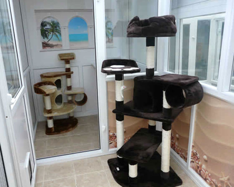 west lodge cattery located in cambridgeshire
