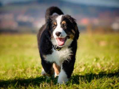 The 8 Large Dog Breeds That Make the Best Pets