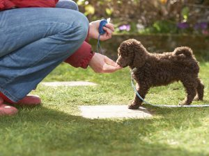 Clicker Training: 4 Secrets to Teaching Your Dog New Behaviours