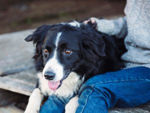 Separation Anxiety in Dogs: Signs and Solutions