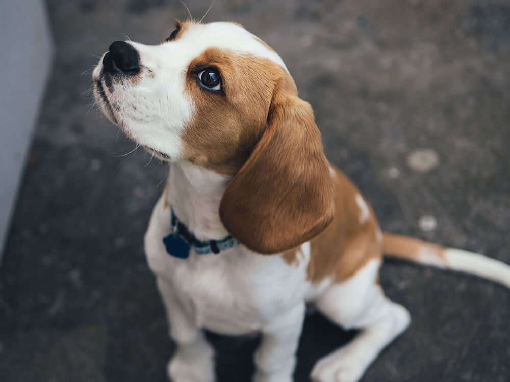 steps to dog clicker training