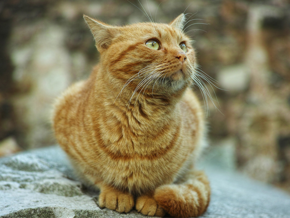 Interpreting Your Cat's Wagging Tail