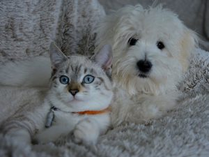 Cat vs Dog: Which Pet Would You Rather Have?
