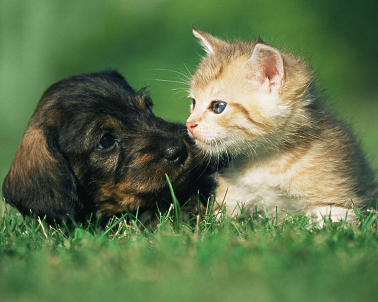 dog and cat can boost human microbiota