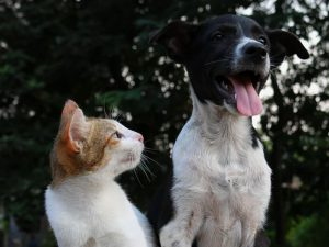 cat looking at the dog