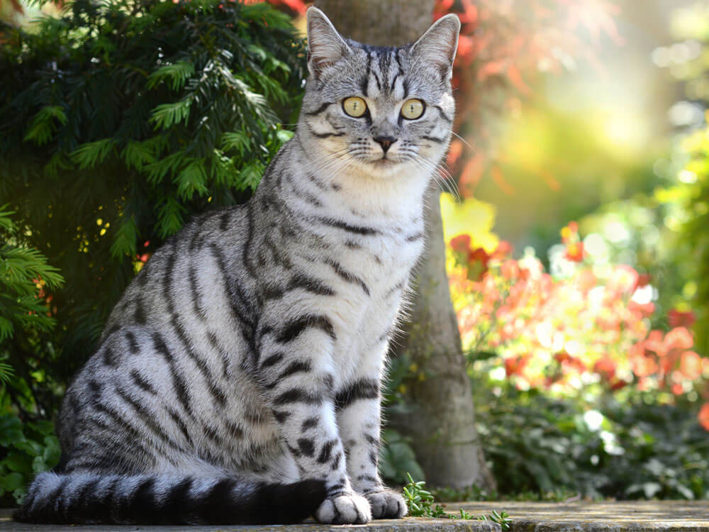 facts about 6 cat behaviours