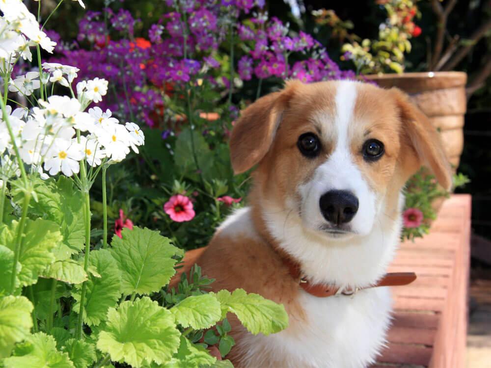 dog standing near a poisonous garden plant