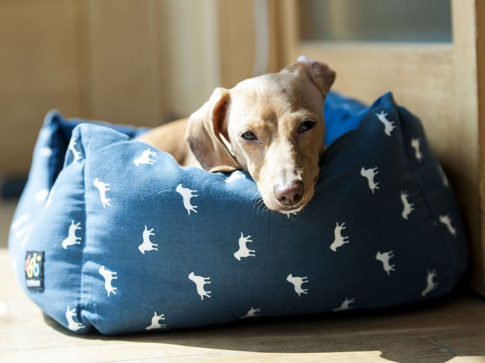 dog suffering from arthritis lying in a comfy bed