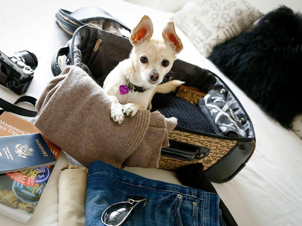 dog with pet passport